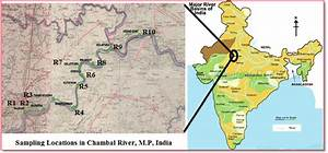 Map Showing Sampling Location In Chambal River  India