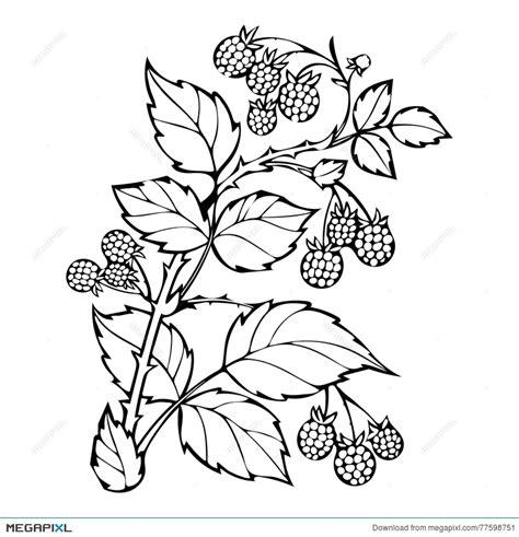raspberry bush clipart black and white raspberry bush clipart black and white how to format