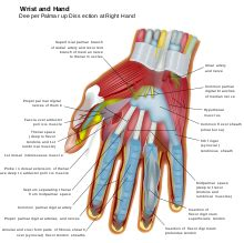 Hand Wikipedia