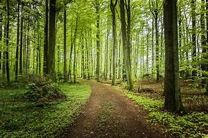 Forest trees road landscape wallpaper | 2121x1414 | 169324 ...