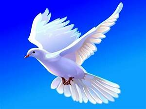 Doves images Doves HD wallpaper and background photos ...