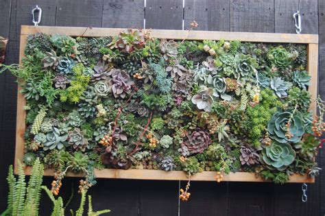 Vertical Gardening :  Creating A Living Wall Using