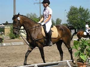 Welches Scharnier Für Welche Tür : welche farben f r welches pferd in welcher farbe ist euer pferd eingekleidet forum ~ Frokenaadalensverden.com Haus und Dekorationen