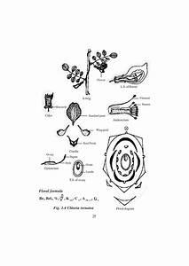 Std12-botany-em By Bevin Levin
