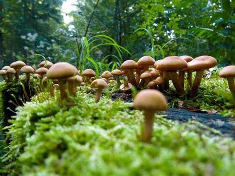 Braune Pilze Im Garten Bilder by Naturdetektive F 252 R Kinder Www Naturdetektive De Pilze