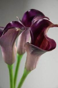 """Real Touch Deep Purple Calla Lily Bud Flowers 25"""""""