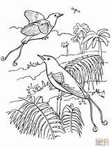 Paradise Coloring Colorear Paraiso Dibujos Bird Birds Coloriage Colorare Desenhos Quetzal Disegni Clash King Imprimer Imprimir Colorir Dibujo Template Desenho sketch template