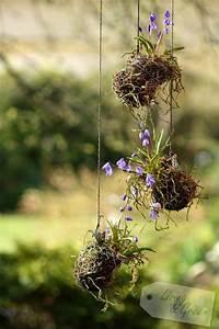 Hängende Pflanzen Aussen : fr hjahrs auf putz hasendraht diy fr hlingsblumen gestecke kr nze pinterest hasendraht ~ Sanjose-hotels-ca.com Haus und Dekorationen