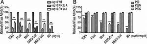 Biochemical Analyses Of Nsp10 Mutants And Its Derived