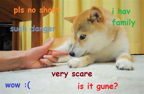 Such Doge Meme - original doge meme such