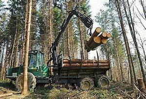 Kubikmeter Berechnen Holz : holz pro jahr 10 mio kubikmeter mehr ~ Yasmunasinghe.com Haus und Dekorationen