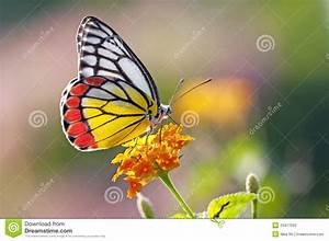 Butterfly On A Flower Stock Image  Image Of Pattern