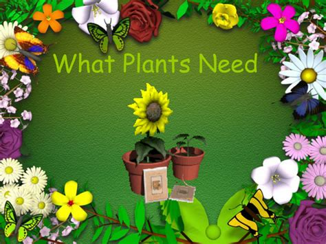 what plants need an iwb presentation by bevevans22