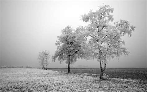desktop wallpapers frozen trees desktop wallpapers