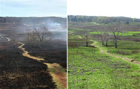 burning questions wildfires public lands