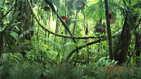wild jungle animated wallpaper httpwwwdesktopanimated