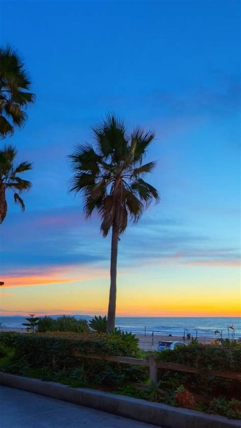 california beaches palm trees wallpaper