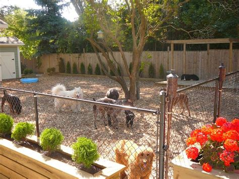patio solutions for dogs 17 best ideas about friendly backyard on