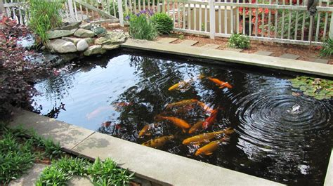 koi fish pond design formal koi pond design koi pond design that can make the fish stay healthy and beautiful