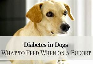 diabetes in dogs feed on a bud