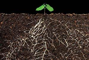 Root System - Sylvia's Blog