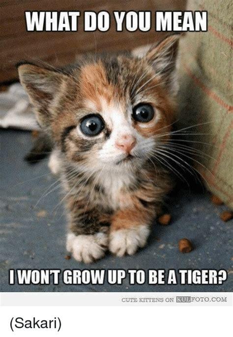 Cute Kitty Meme - 25 best memes about cute kittens cute kittens memes
