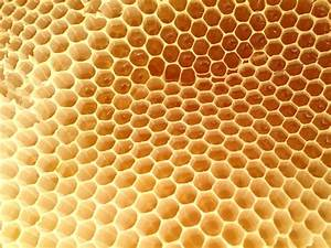 On the topography of honeycomb... - Milkwood: permaculture ...  Honeycomb
