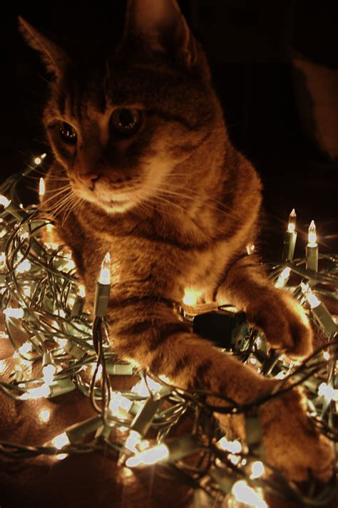 Cat And Electric Lights By Michael Jastremski Texas Cat