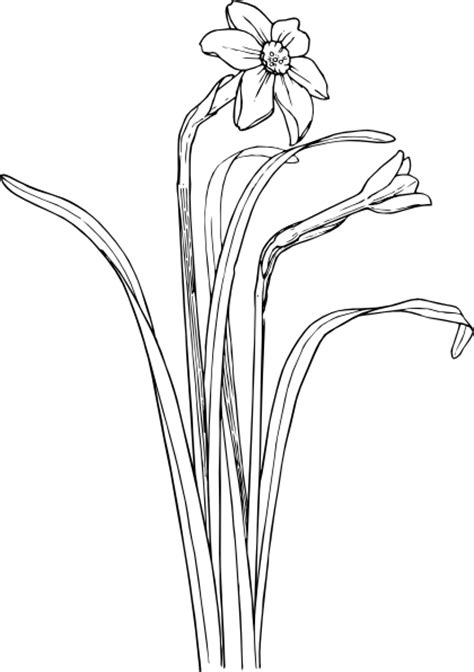 flower plant stem bush clip art  clkercom vector clip art  royalty  public domain