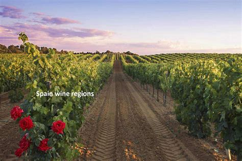 wine regions  spain maps grapes  information