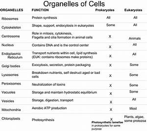 Organelle With Its Function
