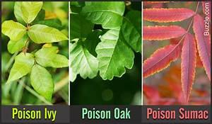 How To Identify Poison Oak Poison Ivy And Poison Sumac