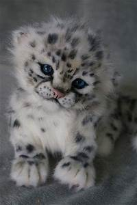 25+ best ideas about Baby animals on Pinterest | Adorable ...