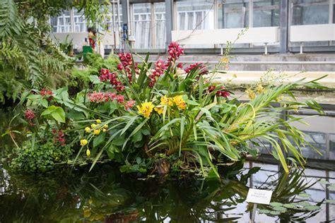 Orchideenschau Botanischer Garten München 2018 orchideenschau 2018 im boga leipzig 187 majas pflanzenblog
