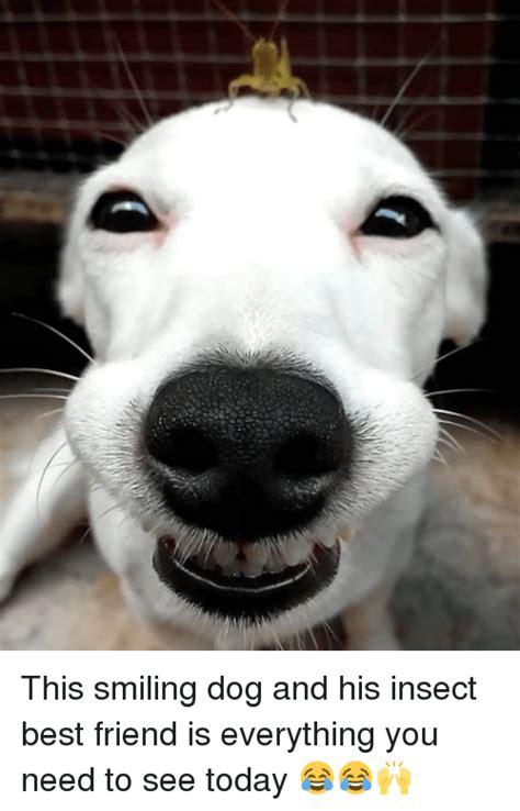 Smile Dog Meme - 25 best memes about smile dog smile dog memes