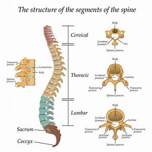 Anatomy Of Spinal Stenosis