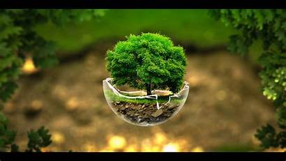 Tree Wallpapers Background Backgrounds Trees Desktop Nature