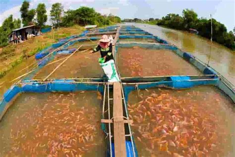 types  fish farms probity farmers forum