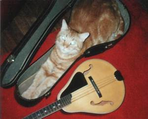 No guitar, you take me! | Funny Cat Pictures