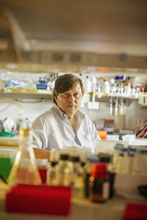 Immune System Disruption Stanford Medicine