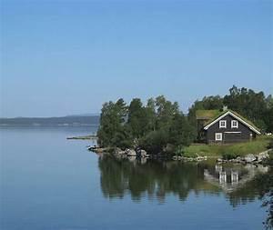 Elg U00e5 Ved Femunden  Engerdal  Hedmark  Norge