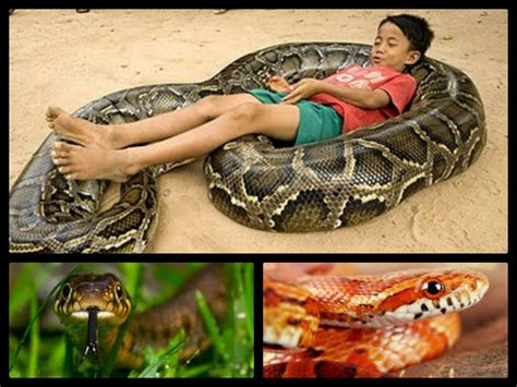 snake pictures kids search