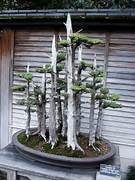 Huntington Library Japanese Bonsai Garden 0082 Flickr Photo Freshing Serene And Harmonious Small Garden Idea Concept For Limited Bonsais On Pinterest Bonsai Bonsai Trees And Juniper Bonsai Trees For Decoration This Is An Amazing Idea To Decorate Your Home