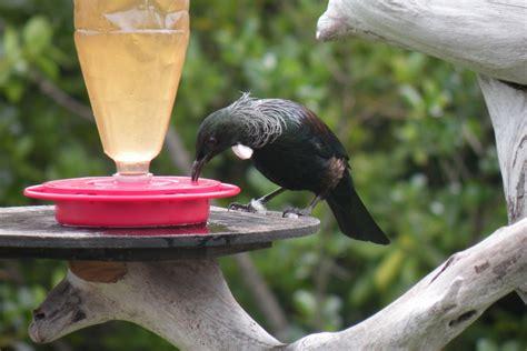 top 28 nectar for birds vireo bird photos nectar