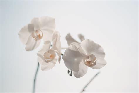 witte producten fotograferen tegen een witte achtergrond