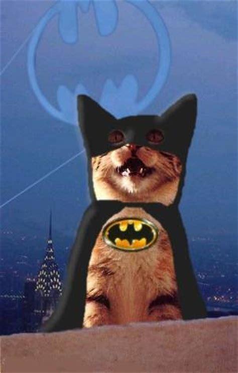 bat cat a new batman in 2008 images photos and