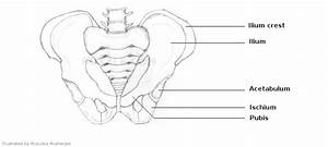 13 Best Images Of Worksheets Human Anatomy Bones