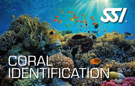 coral identification course scuba diving ssi specialty courses fish certification dive