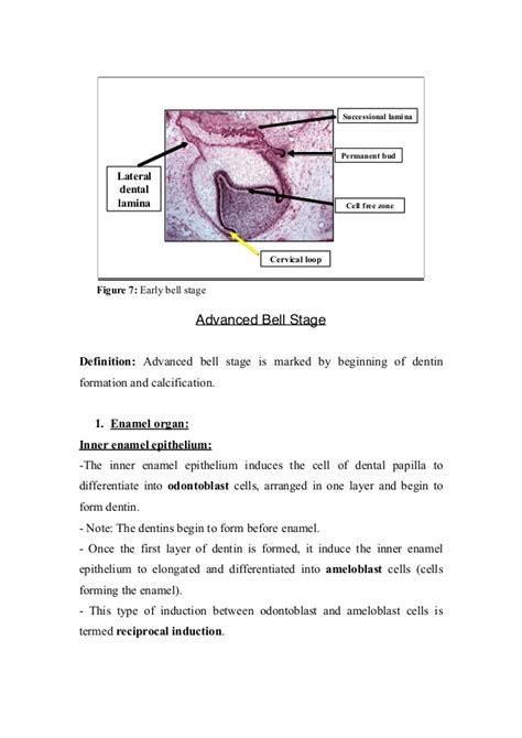 Biology Define Biology At Dictionarycom  Autos Post
