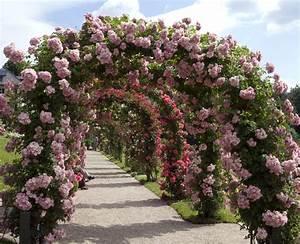 Ranken Blumen Garten : blumen lieferdienste blog archive pflanzen die klettern ~ Whattoseeinmadrid.com Haus und Dekorationen